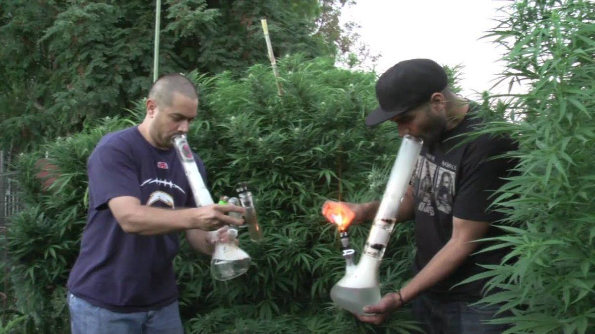 поля марихуаны или как купить траву